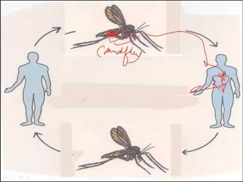 zeolit detoxifiant prospect viermi în tratamentul intestinului subțire