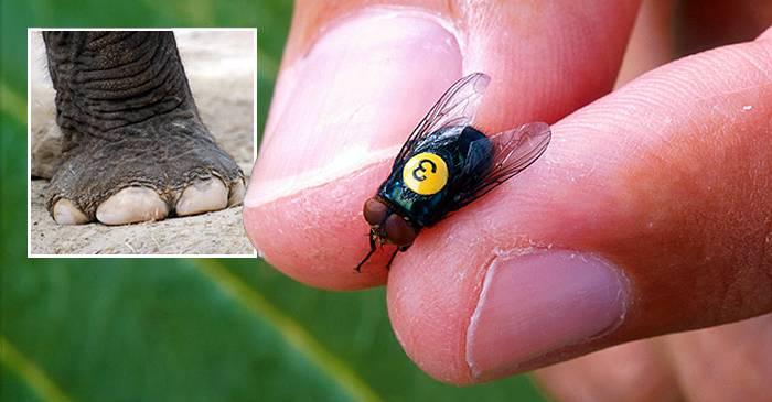 larve parazite umane