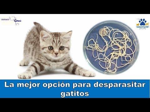 oxiuros en gatos beneficiile detoxifierii organismului