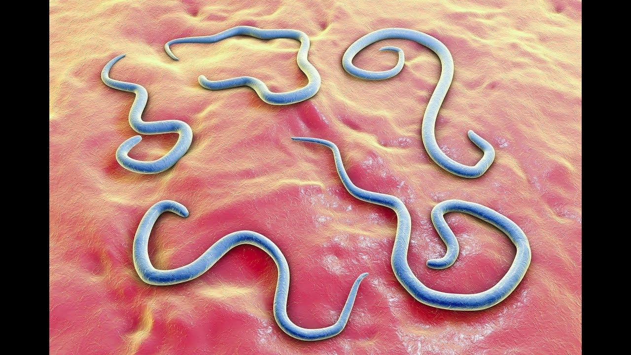 medicament antihelmintic pentru copii viermi sistemul nervos