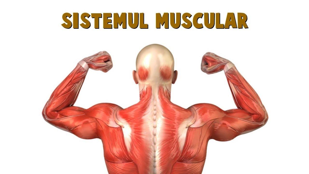 paraziti musculari