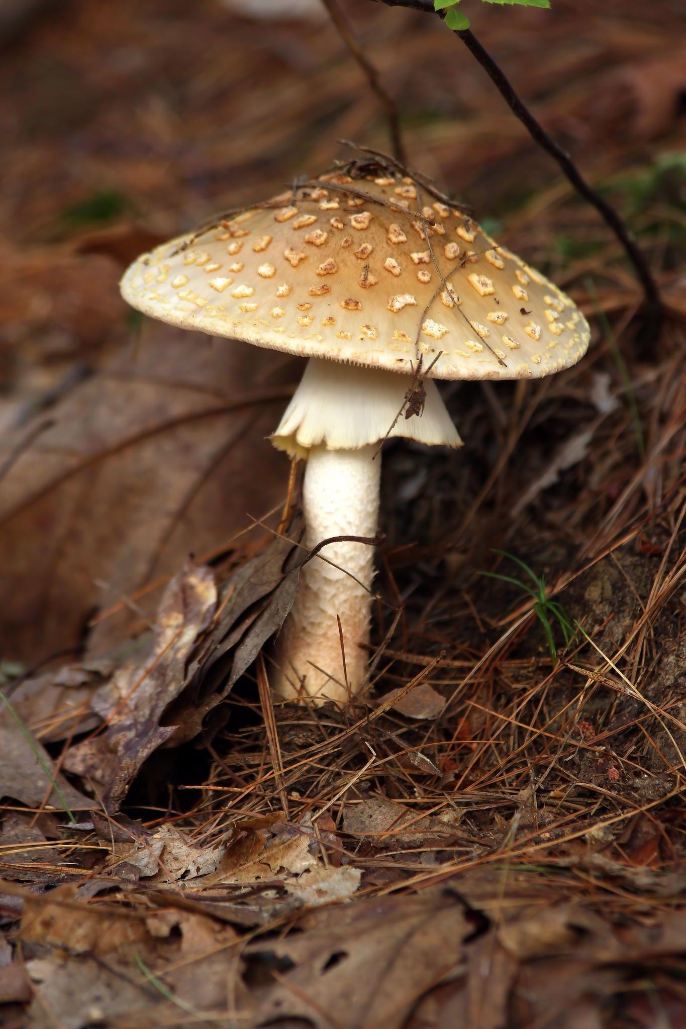 Curatarea organismului de paraziti, Toți ciupercile sunt paraziți