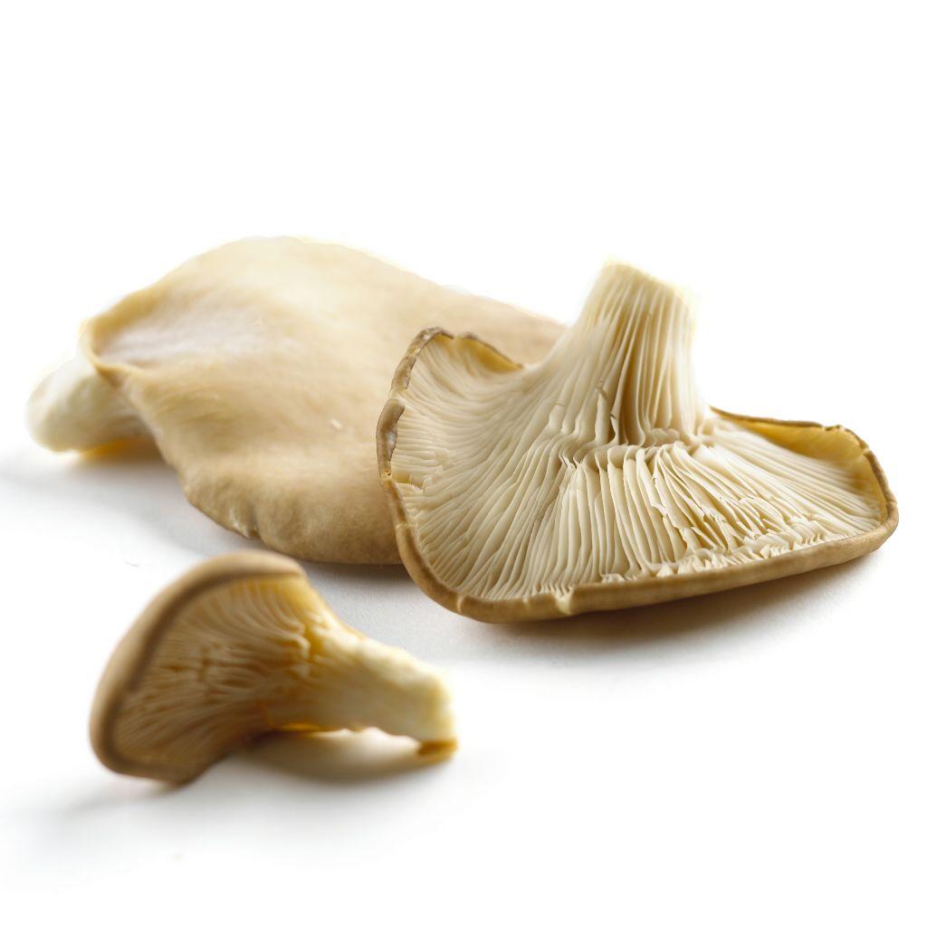 ciuperci king oyster pret)