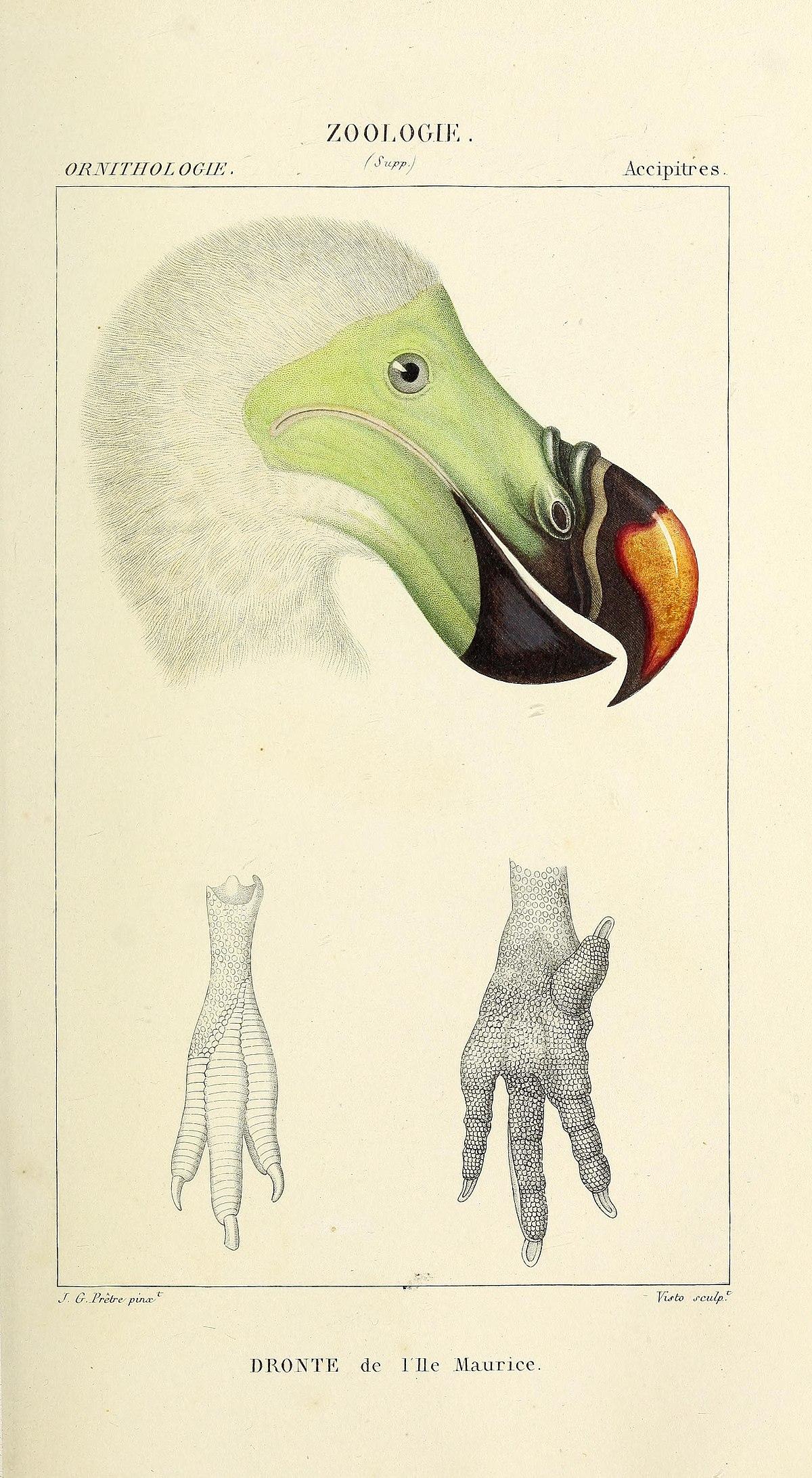zoologie de tenă)