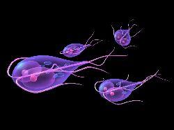 originea verucilor genitale noi descoperiri în tratamentul paraziților