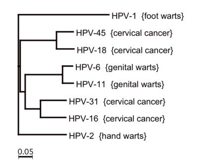 human papilloma virus tip 16 giardiaza în scaun