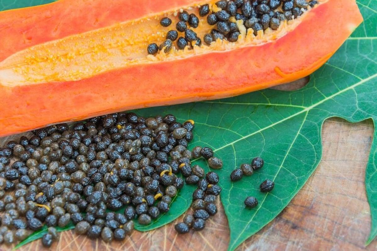 Verme giardia remedio caseiro. Chá para Eliminar Vermes e Viroses em Gatos hpv impfung manner ab 18