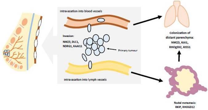 papiloma pie cancer tablete masticabile de vierme