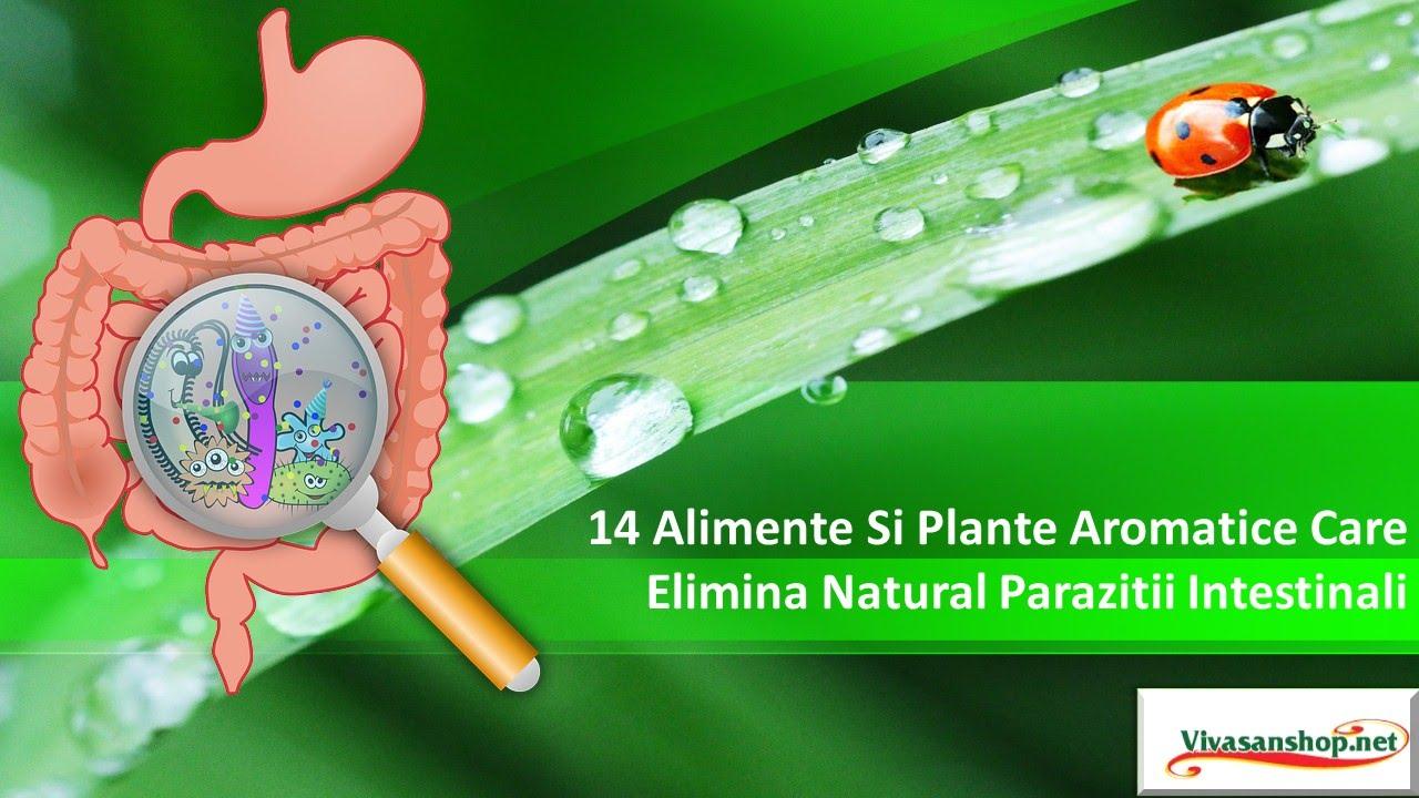 Medicamentele curăță corpul de paraziți