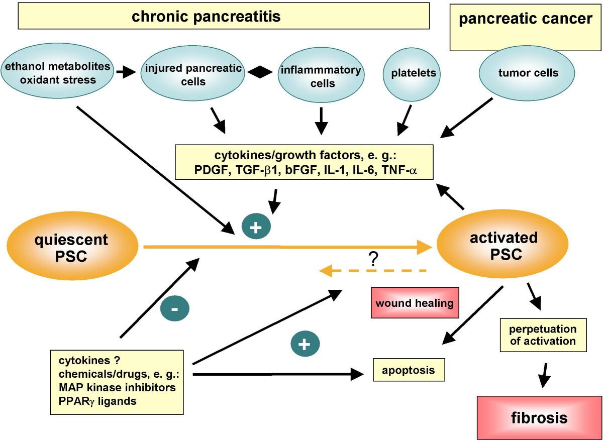 semne și tratamentul paraziților shake uri proteice pentru slabit
