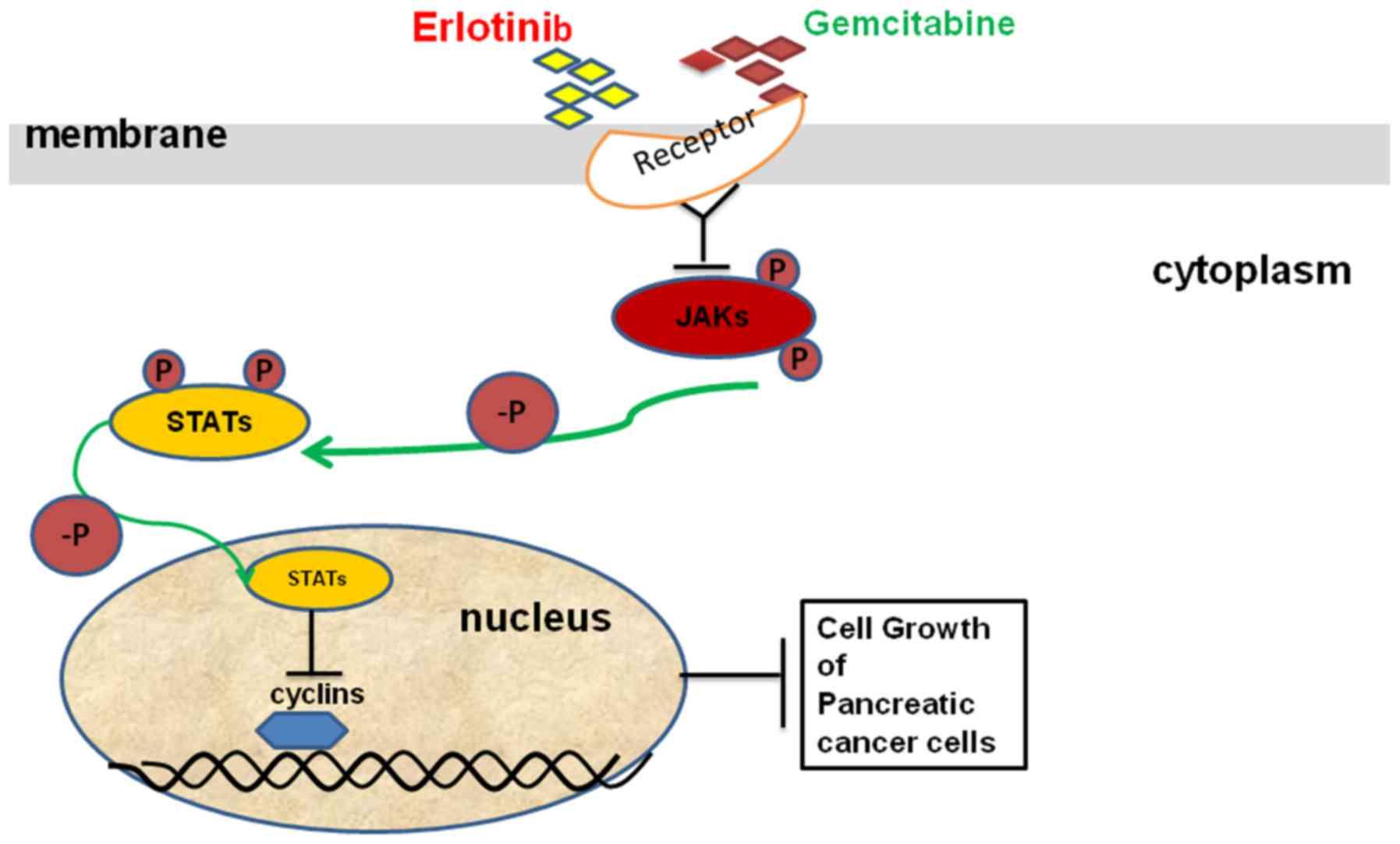 pancreatic cancer erlotinib