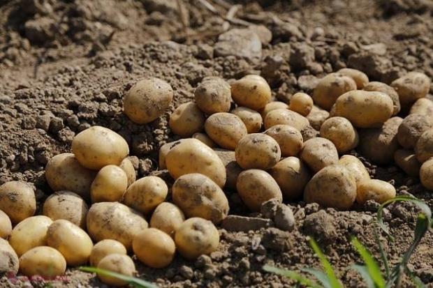 tratamentul papilomelor cu cartofi