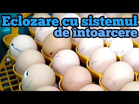 ouă de helmint cum să donezi
