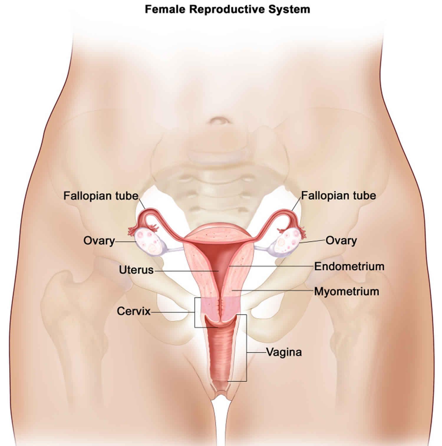 Cancer peritoneal cavity - Giardiaza vacuna