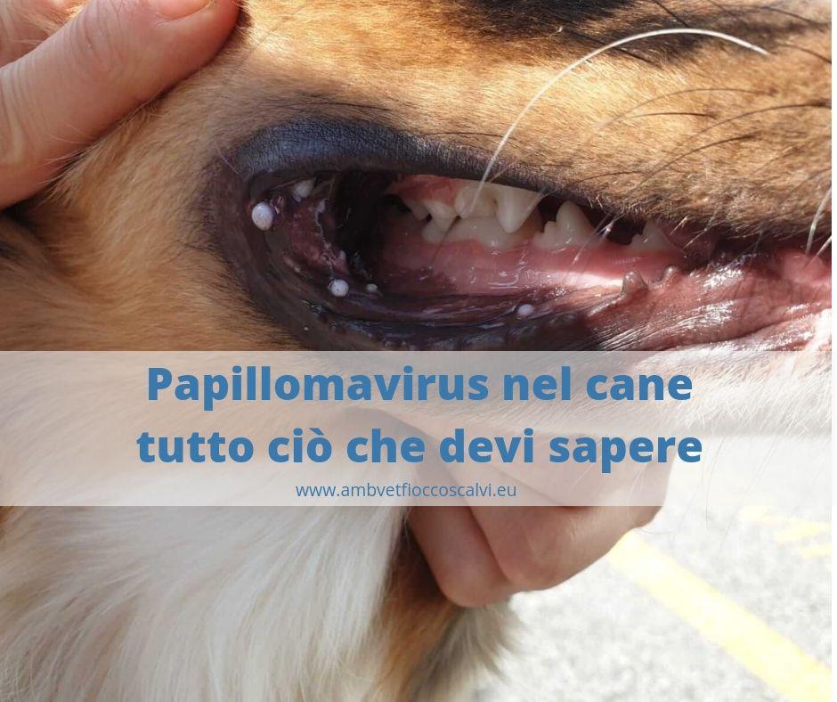 Papilloma virus nel cane terapia,