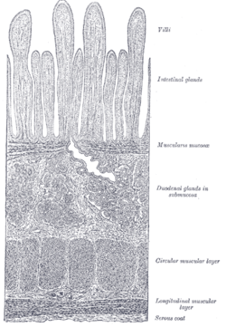 trecere helminthosporium turcicum tratament pentru constipație de vierme