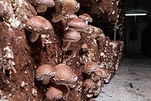 Ciupercile trunchiului si a ramurilor, prevenire si combatere - Blog Botanistii | Ajutor in Gradina