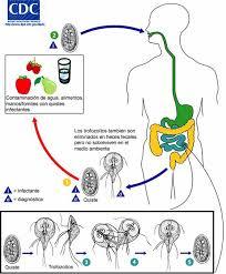 Detectie antigene parazitare