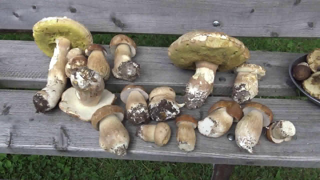 scapă de ciuperci parazite crema de rostopasca pentru negi