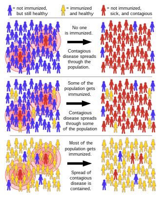 human papillomavirus vaccine herd immunity cum să scapi de viermi fără clisme