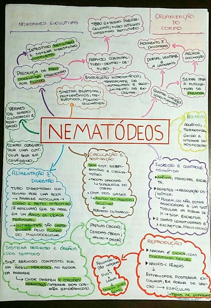 Resumo sobre platyhelminthes e nematoda, Свежие записи