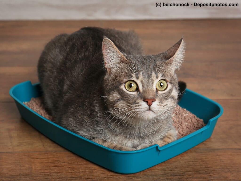giardien katze ohne durchfall