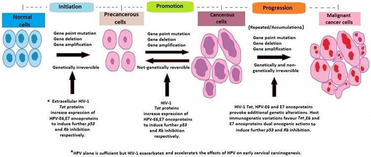 human papillomavirus infection causes hiv