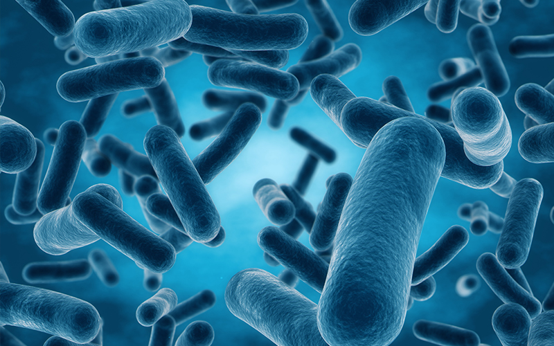 Cauzele și simptomele bacteriei E. coli | Domestos