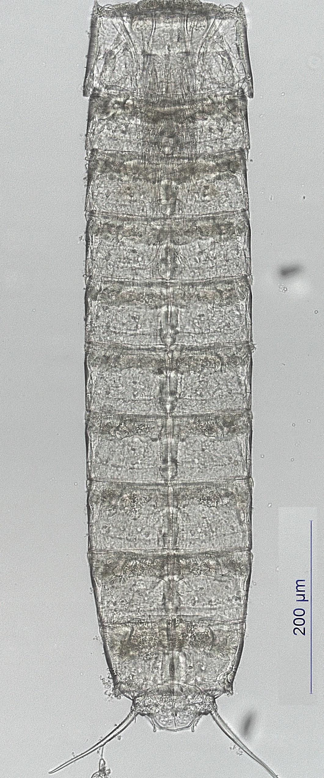 vaccino contro papilloma virus maschio
