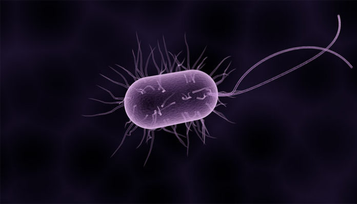paraziti u mozgu cum să eliminați condiloamele în intim