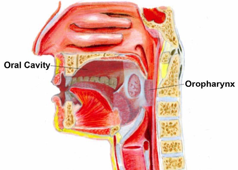 hpv virus in head and neck cancer apariția negi genitale la bărbați