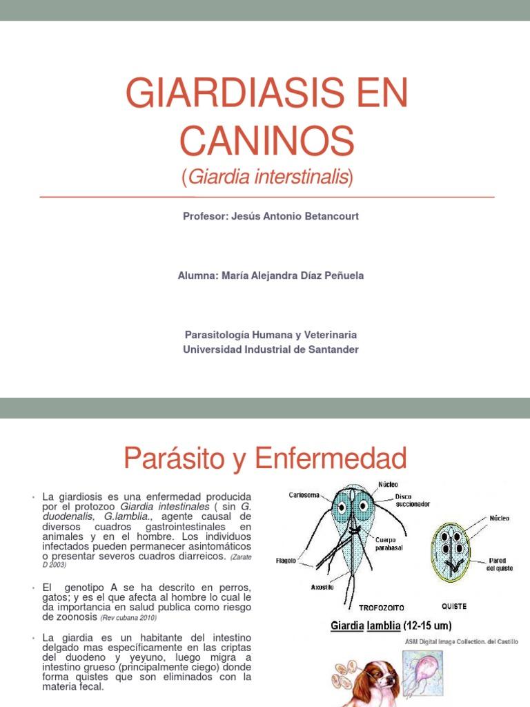 giardia como zoonosis)