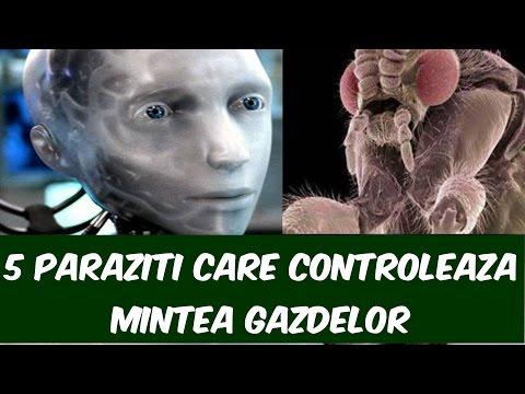 tratamentul parazit mytischi
