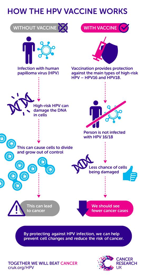 hpv and cancer male hpv virus schwangerschaft