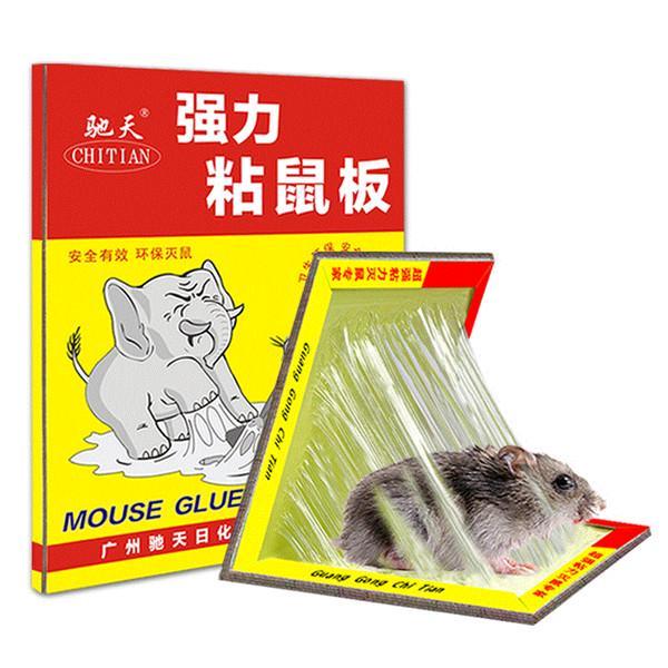îndepărtarea papilomului de șoarece scaun galben giardiasis