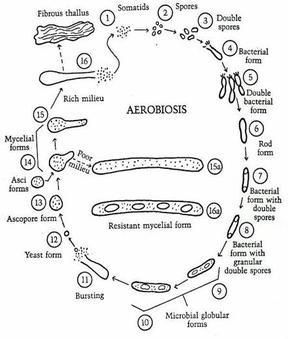 papilloma skin icd 10