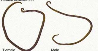 Condiloame genitale   Indol3C - supliment alimentar