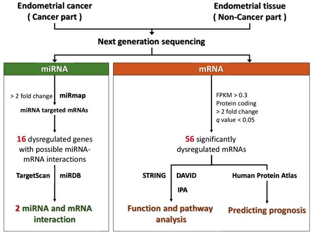 endometrial cancer is it genetic