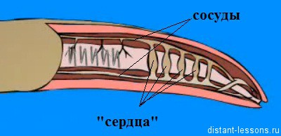 semne ale paraziților din corpul uman does human papillomavirus cause genital