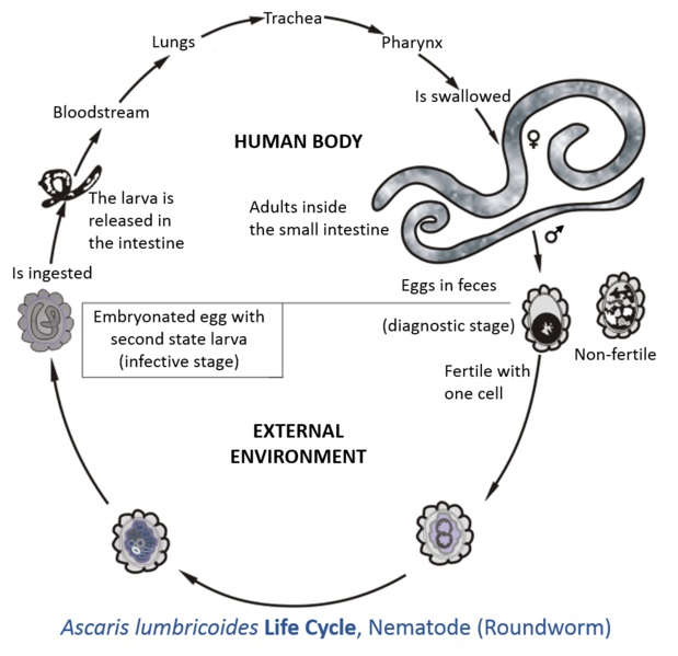 definition of helminth lichide de găuri de vierme