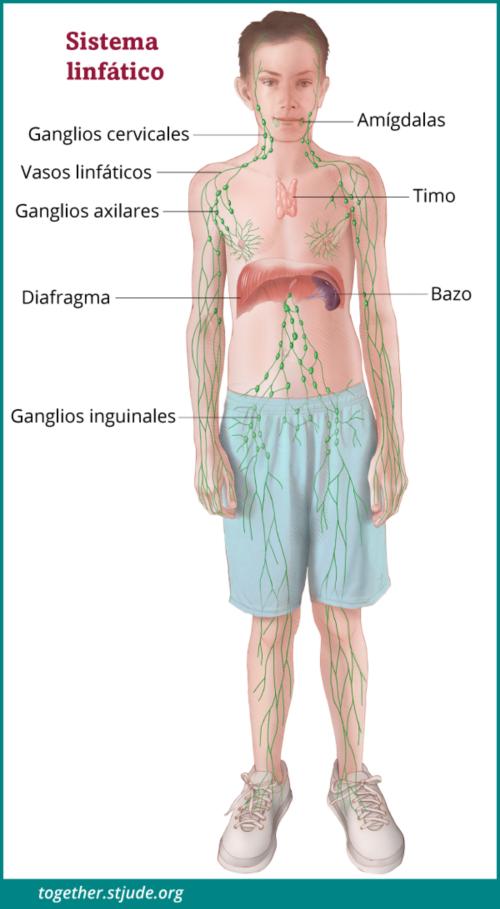 cancer infome hodgkin porumb nematod