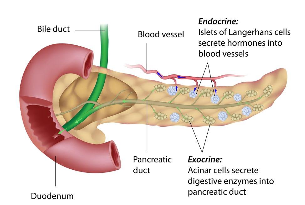 cancerul pancreatic exocrin detoxifierea colonului cu ulei de ricin