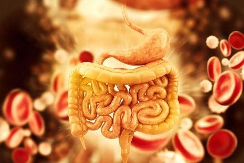 detoxifiant intestin de ulei de ricin