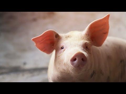 tratamentul nematodei porcine malignant human papillomavirus 16