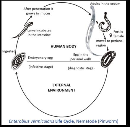 human papilloma virus causing throat cancer medicamentele pentru viermi nu ajută