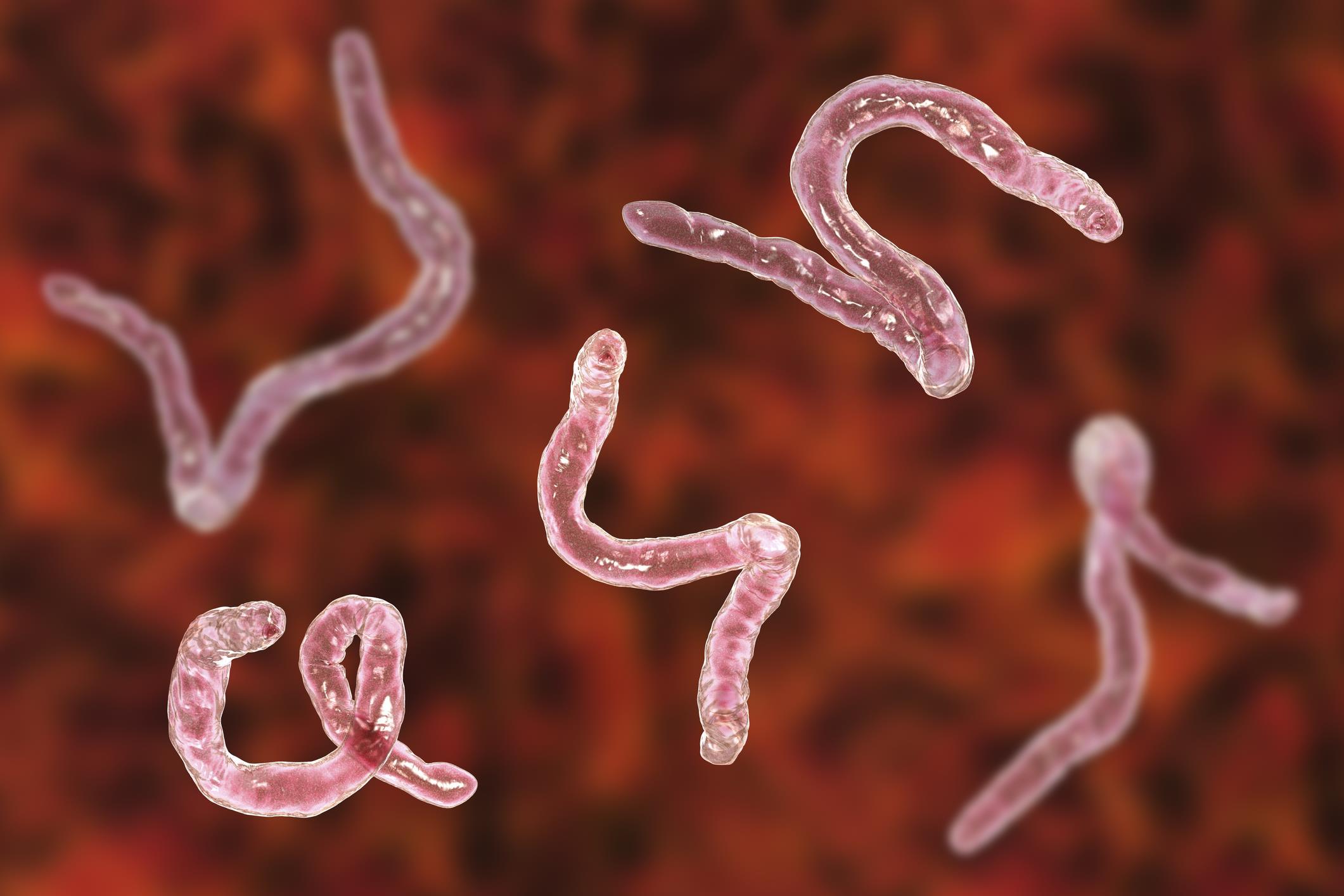 Giardia u ludzi. Lamblia metoda, vaši črvi so v redu