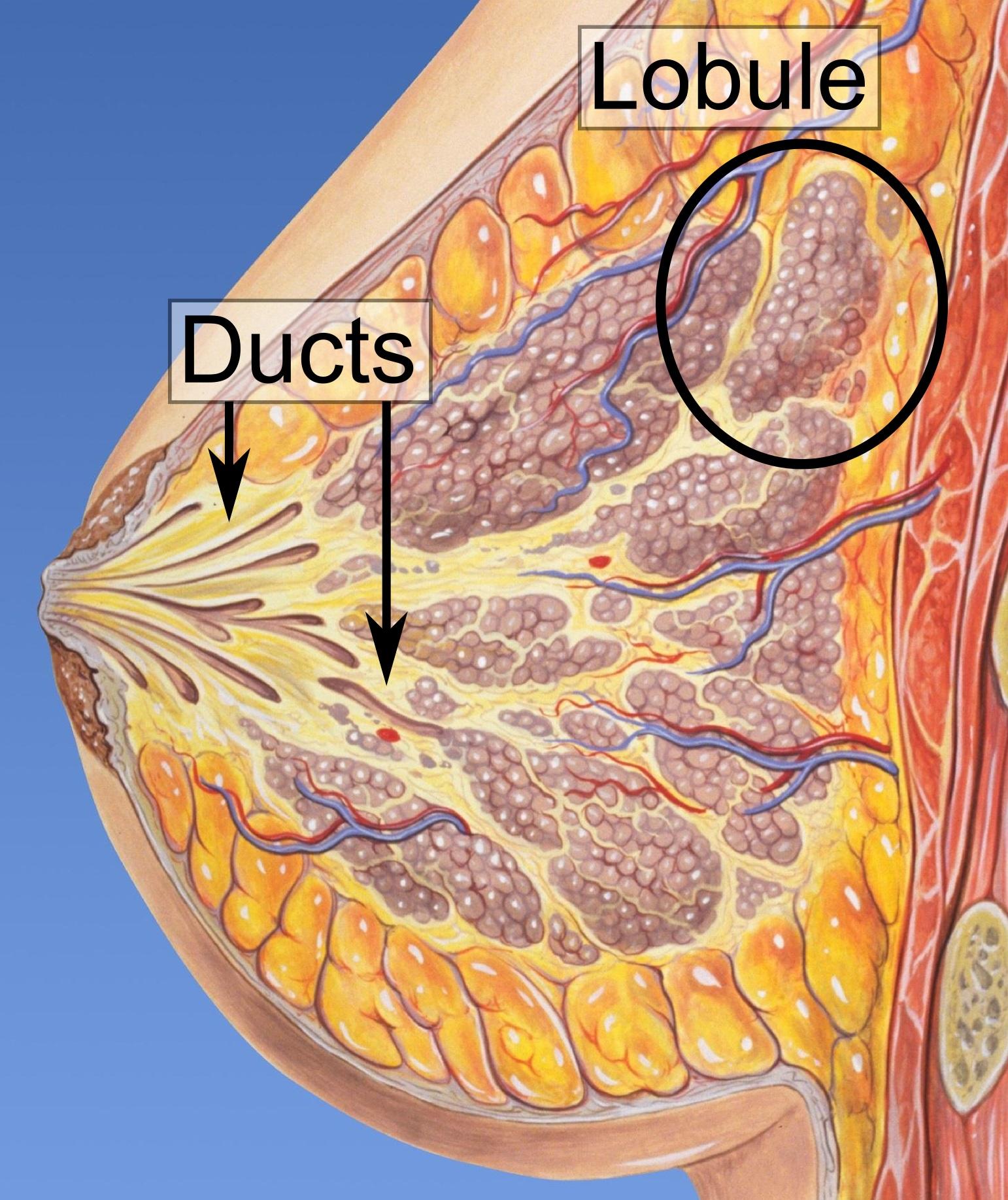 creșterea pe piele sub braț hpv virus false positive