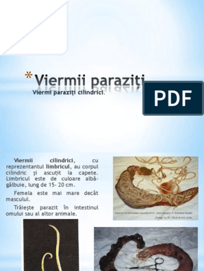 Ademeni viermi de pământ - Informații despre viermi roți