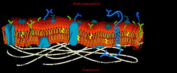 microorganismele sunt paraziți tratamente naturiste pt paraziti intestinali la copii