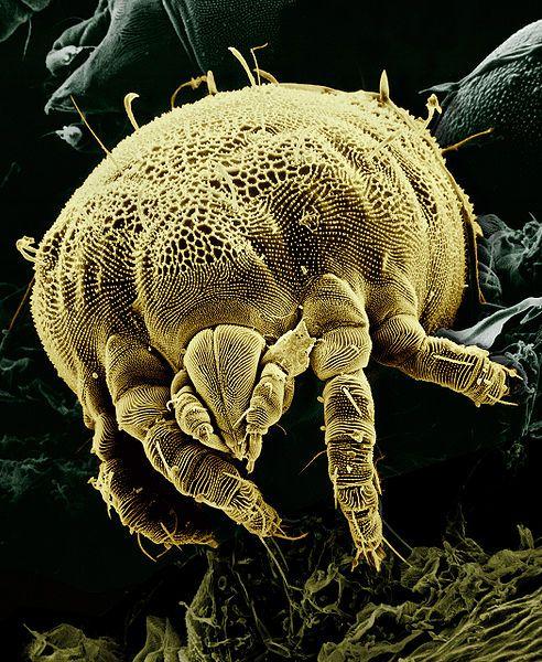 microorganismele sunt paraziți papilom pleoapa tratament